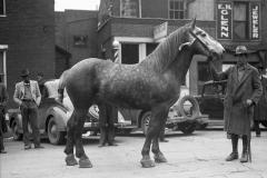 Mule-Day-363141